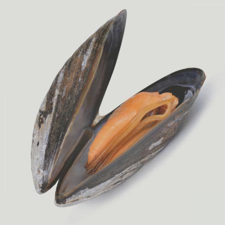 Schaal- & schelp