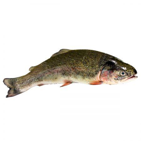 Verse vis, gemarineerd & roerbak